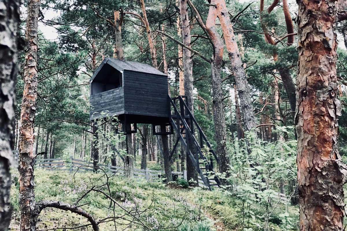 Treehouse jeg melna māja kokā priežu mežā jūras kāpās Teeja arhitektu projekts