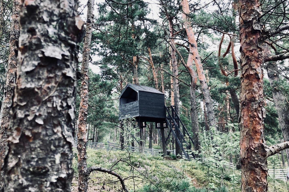 Black treehouse architecture in pine forrest near sea. Melnas mājas kokās arhitektūra priežu kāpā pie jūras