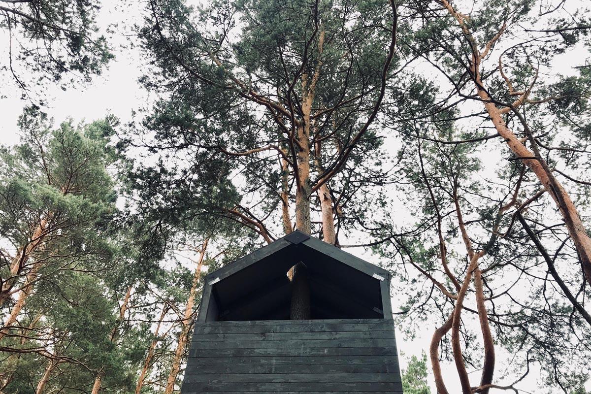 Melna māja kokā priežu mežā